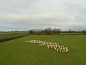 Shep Drone
