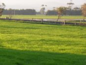 Country farm paddock